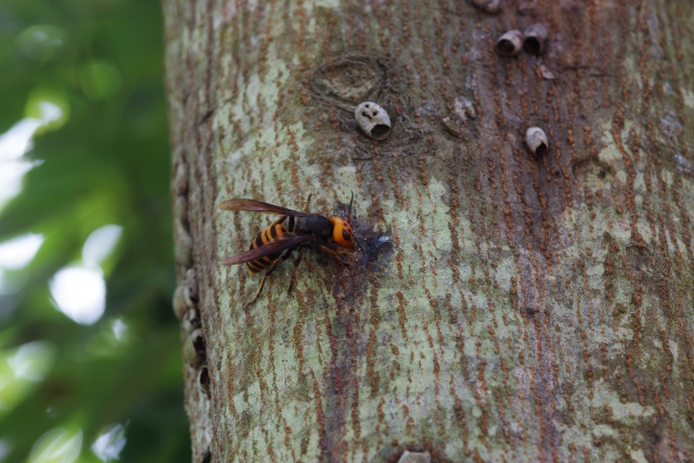 164.fire-ant3