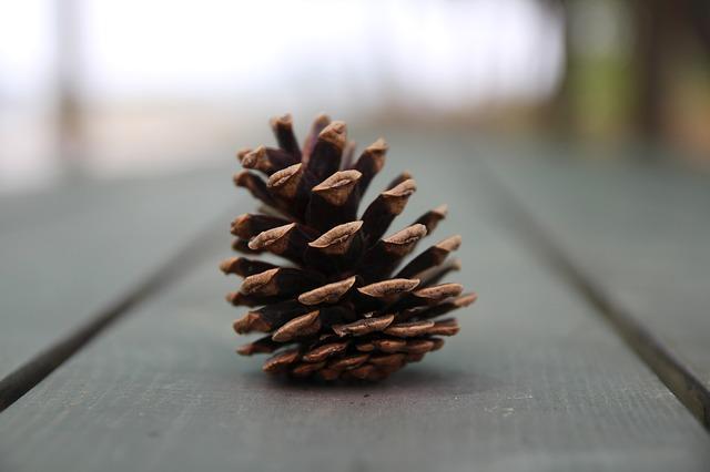 184.pine-nut2