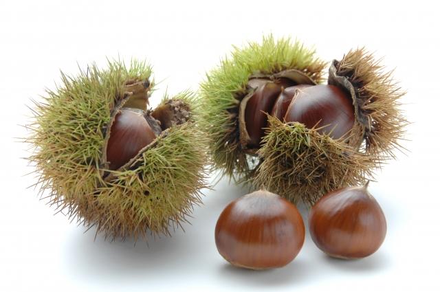 215.chestnut2