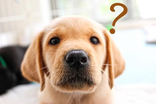 犬が?の画像