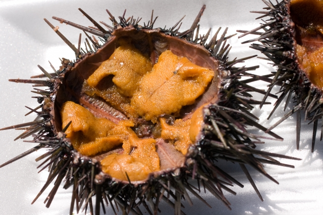 264.sea-urchin-allergy-02