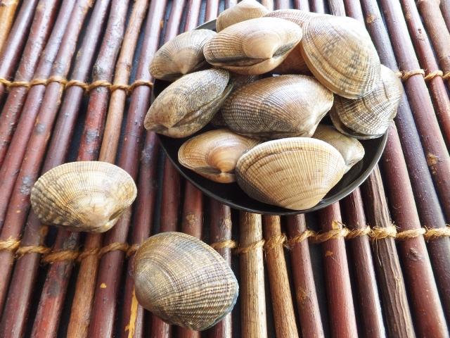 084.clams4
