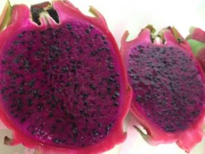 117.dragon-fruit5