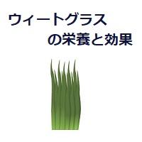 172.wheatgrass