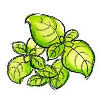 191.basil-seed