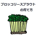 ブロッコリースプラウトの育て方・おすすめ栽培キット活用も!