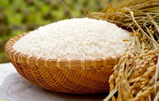 305.rice-allergy-01