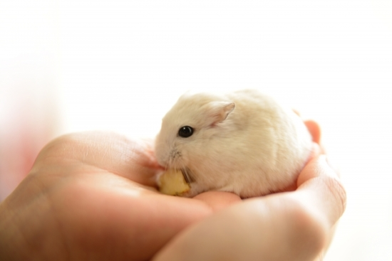 312.hamster-allergy-02