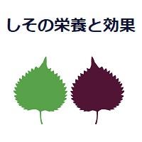 036.shiso-00