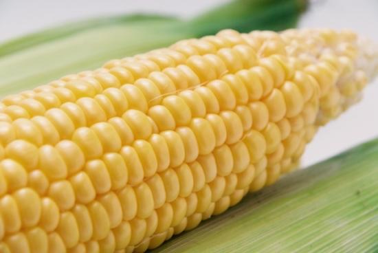 038.corn-03