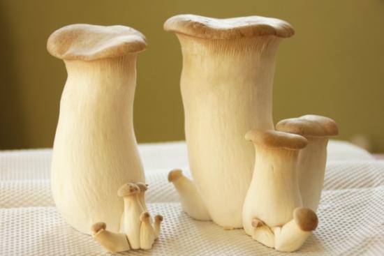 345.mushroom-allergy-05